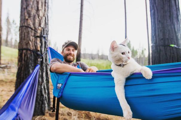 А я говорю, полный вперед! кошки, природа, путешествие, фото, юмор
