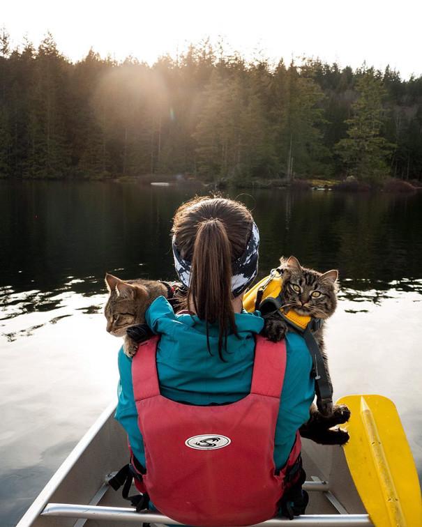 Пустите, жестокие люди! Мы вам не рыбы! кошки, природа, путешествие, фото, юмор