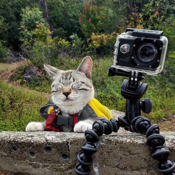 После долгого перехода я устал, но доволен кошки, природа, путешествие, фото, юмор