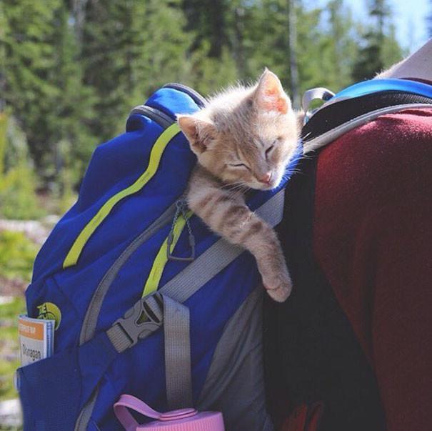 Что-то я устал так долго идти кошки, природа, путешествие, фото, юмор