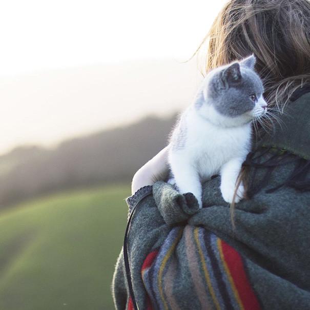 Маленький храбрец кошки, природа, путешествие, фото, юмор