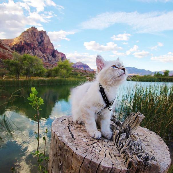 Председательский пенек - чур, мне! кошки, природа, путешествие, фото, юмор
