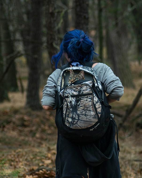Что-то в лесу темновато... кошки, природа, путешествие, фото, юмор