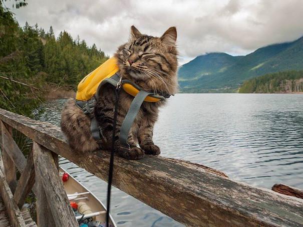 В душе я - капитан! кошки, природа, путешествие, фото, юмор