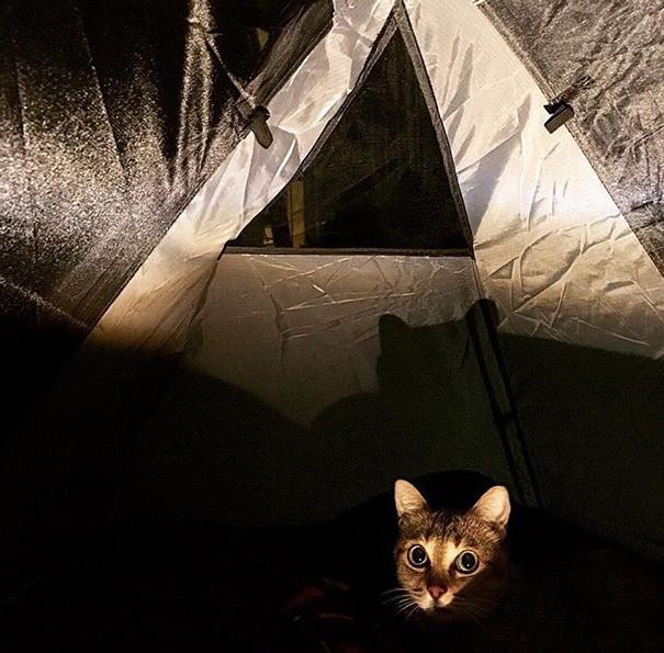 Ночной выход - только для сильных духом! Поэтому людей не берем! кошки, природа, путешествие, фото, юмор