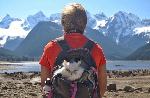 Да, захребетник, и горжусь этим! кошки, природа, путешествие, фото, юмор