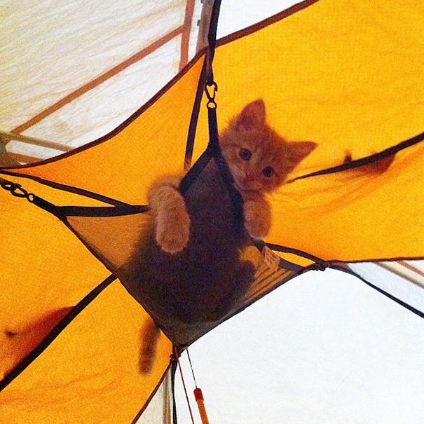 Много места в палатке я не займу! кошки, природа, путешествие, фото, юмор