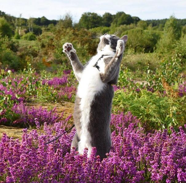 Свобода! кошки, природа, путешествие, фото, юмор