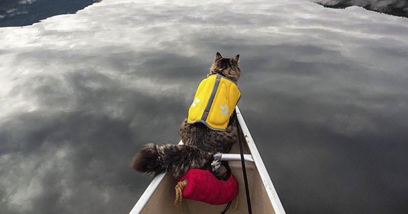 В поход с кошками: столько удовольствия вы еще никогда не получали! кошки, природа, путешествие, фото, юмор