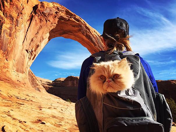 Этот пейзаж мне идет! кошки, природа, путешествие, фото, юмор