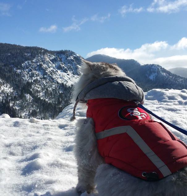 Горы зовут кошки, природа, путешествие, фото, юмор