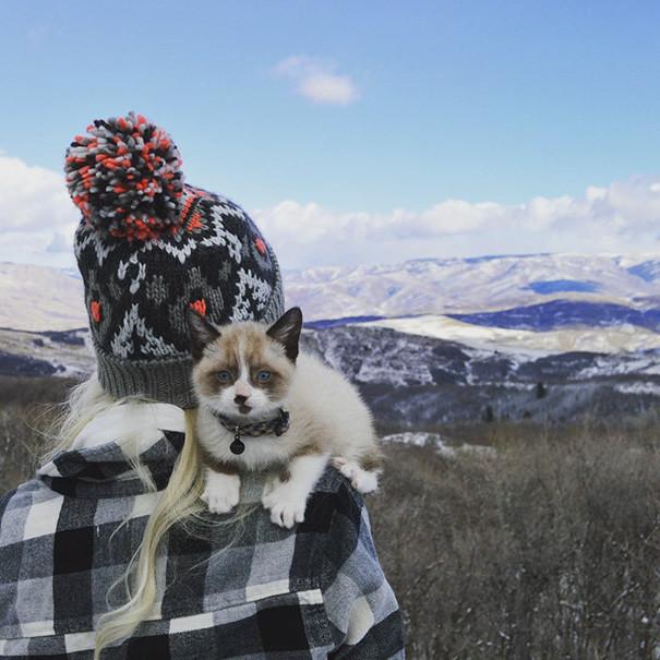 Красота? Какая, к черту, красота? Под куртку пусти, говорю! кошки, природа, путешествие, фото, юмор