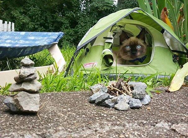 """""""Мяу, какая красота!"""" кошки, природа, путешествие, фото, юмор"""