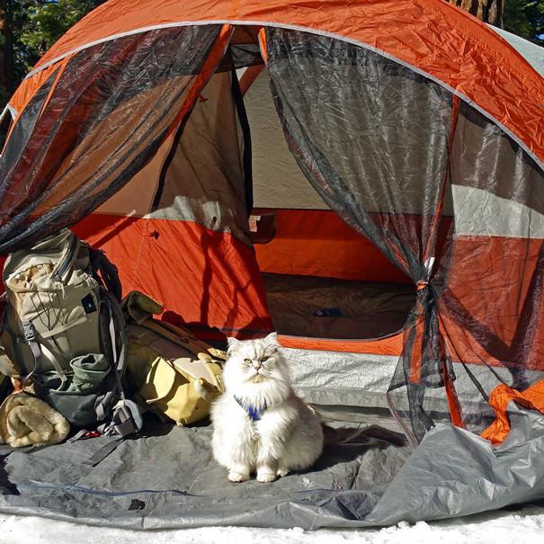Завскладом кошки, природа, путешествие, фото, юмор