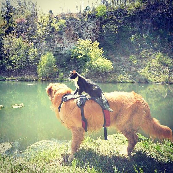 У вас пеший поход, а у меня - конный! кошки, природа, путешествие, фото, юмор
