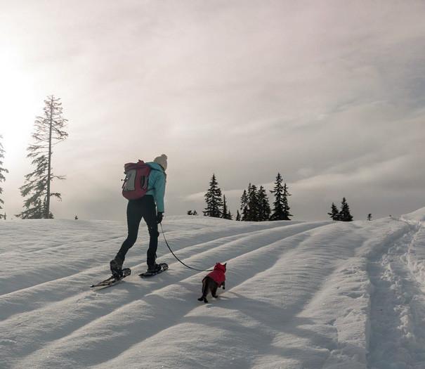 А мои лыжи где? кошки, природа, путешествие, фото, юмор