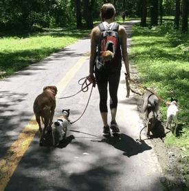дружба зверей, животные, кошки, собаки, утки