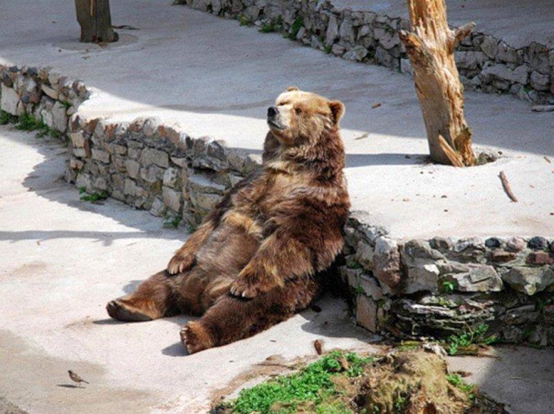 Просто сидеть и созерцать. животные, понедельник, прикол, приуныл, юмор