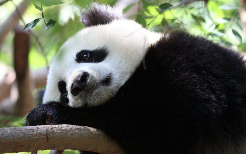 Лежать и думать о вечном. животные, понедельник, прикол, приуныл, юмор