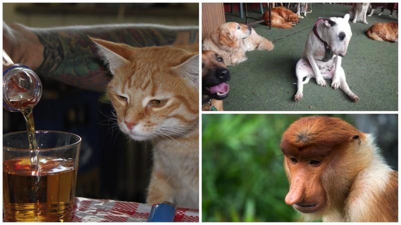 20 животных, которые тоже ненавидят понедельники животные, понедельник, прикол, приуныл, юмор
