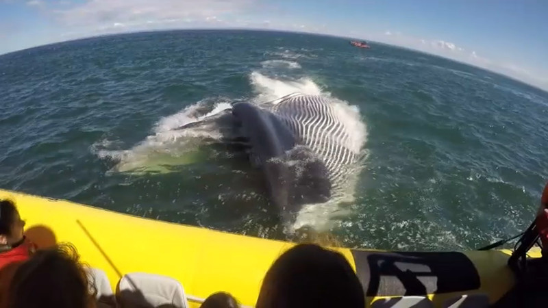 Как гигантский кит напугал туристов в Канаде животные, канада, кит, лодка