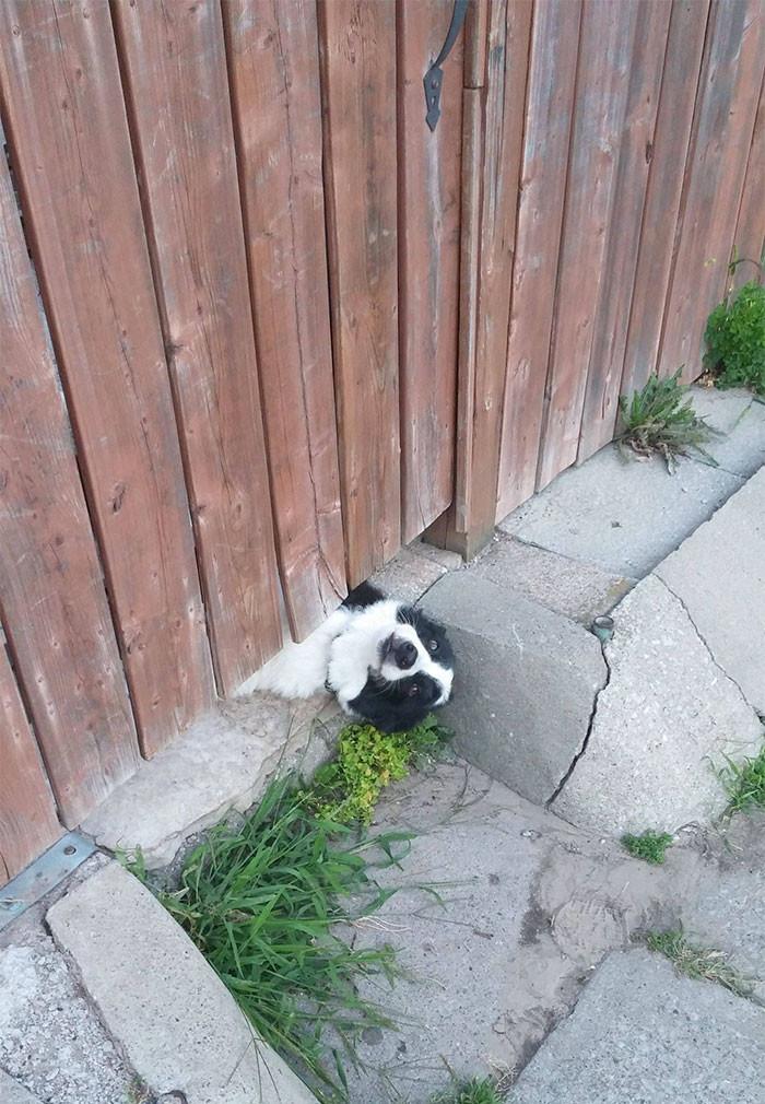 Вот так собака обращает на себя внимание архитектура, собаки