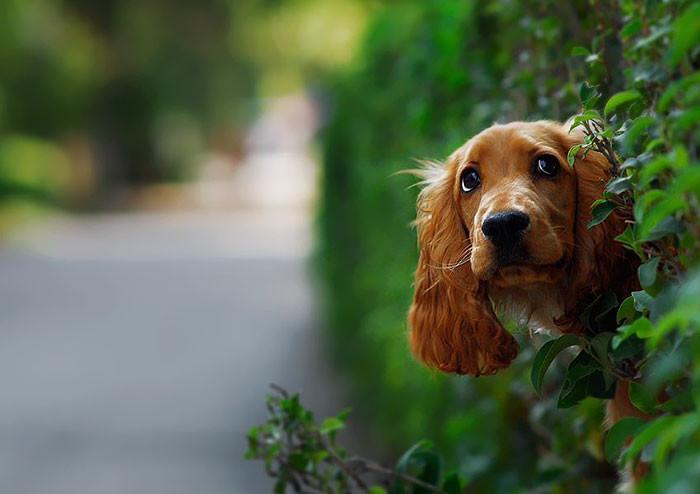 В поисках новых друзей архитектура, собаки