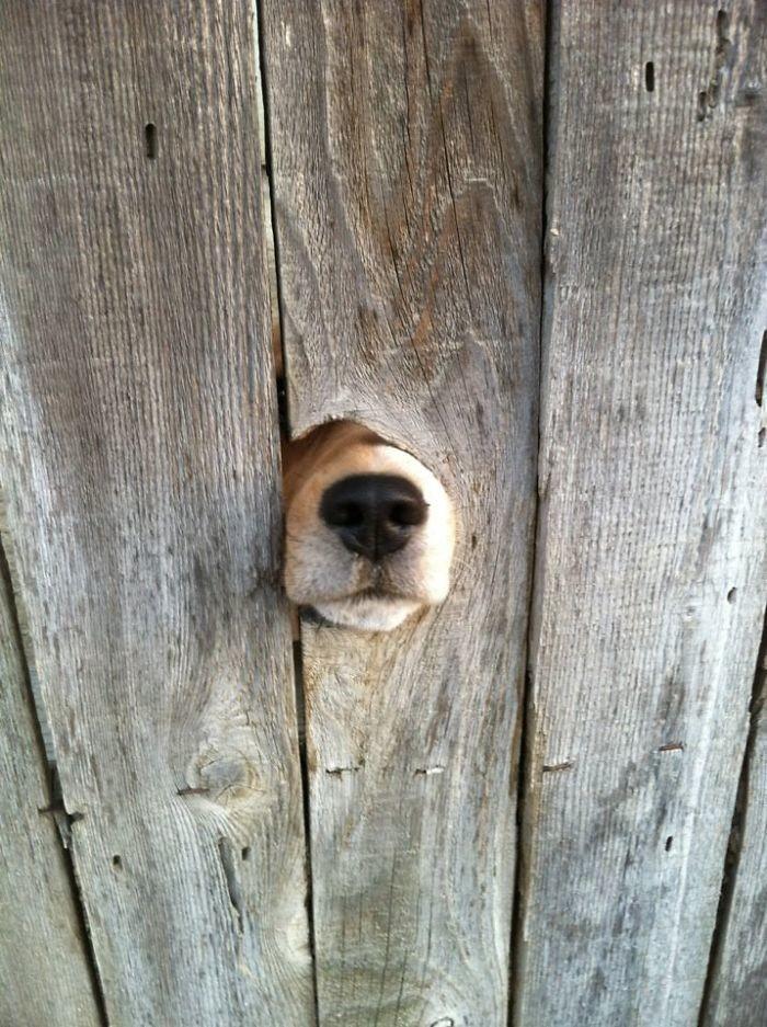 Нос, который хочет к вам архитектура, собаки