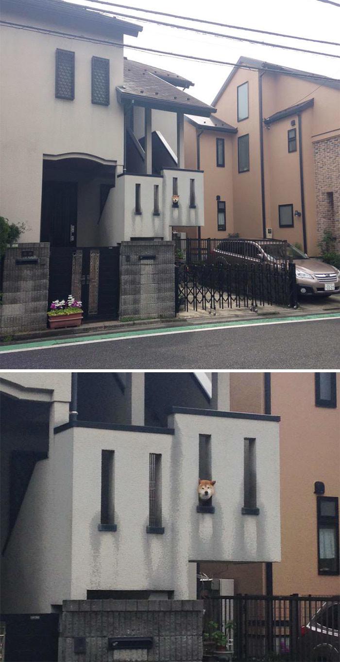 Хорошо здороваться отсюда архитектура, собаки