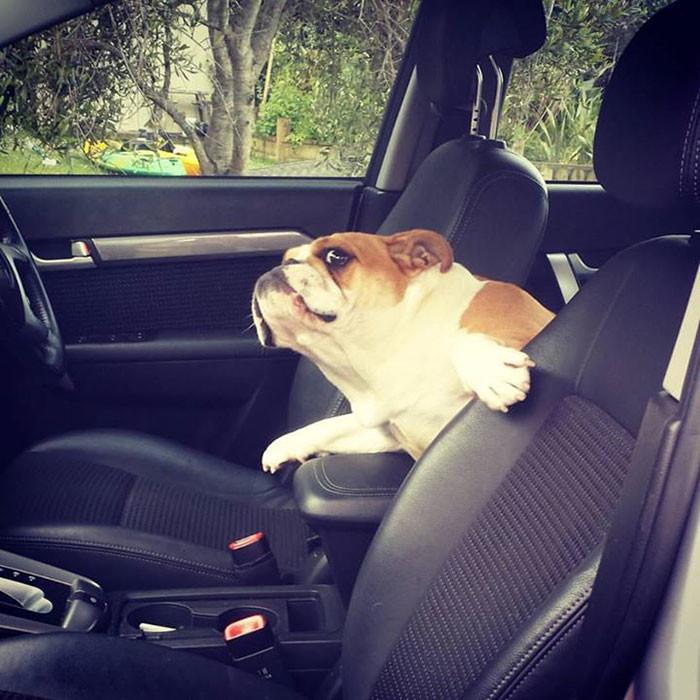 Почему нельзя мешать шоферу? архитектура, собаки