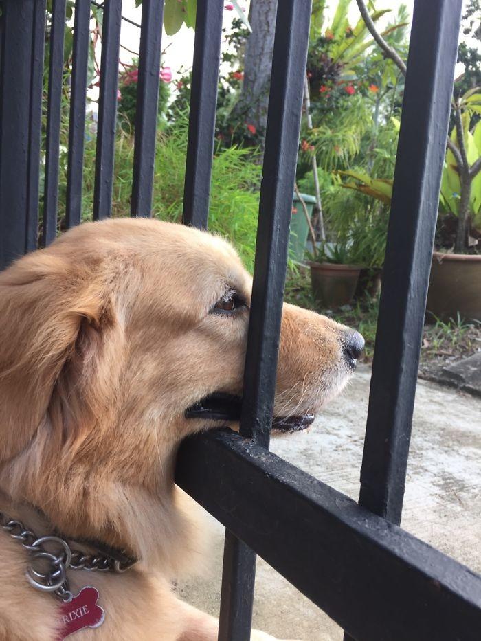 40 отчаянных собак, желающих поздороваться архитектура, собаки