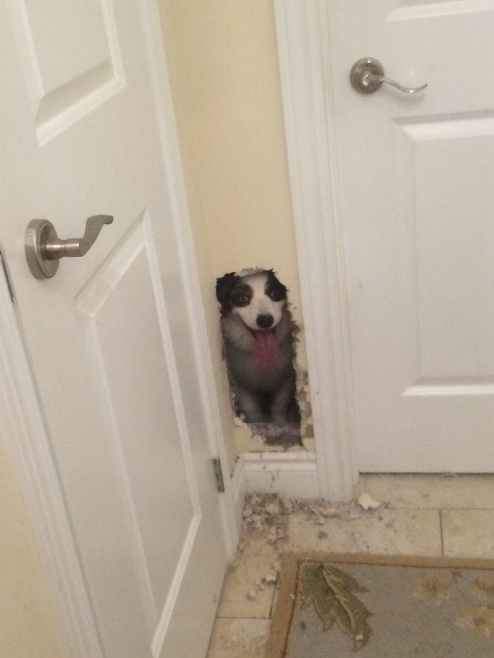 Привет, я дома архитектура, собаки