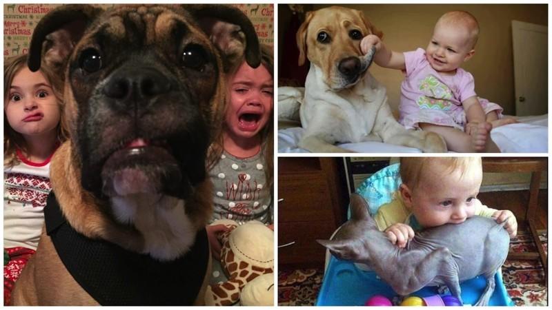 Животные, которые живут с детьми, попадают в рай без очереди дети, животные, прикол, юмор