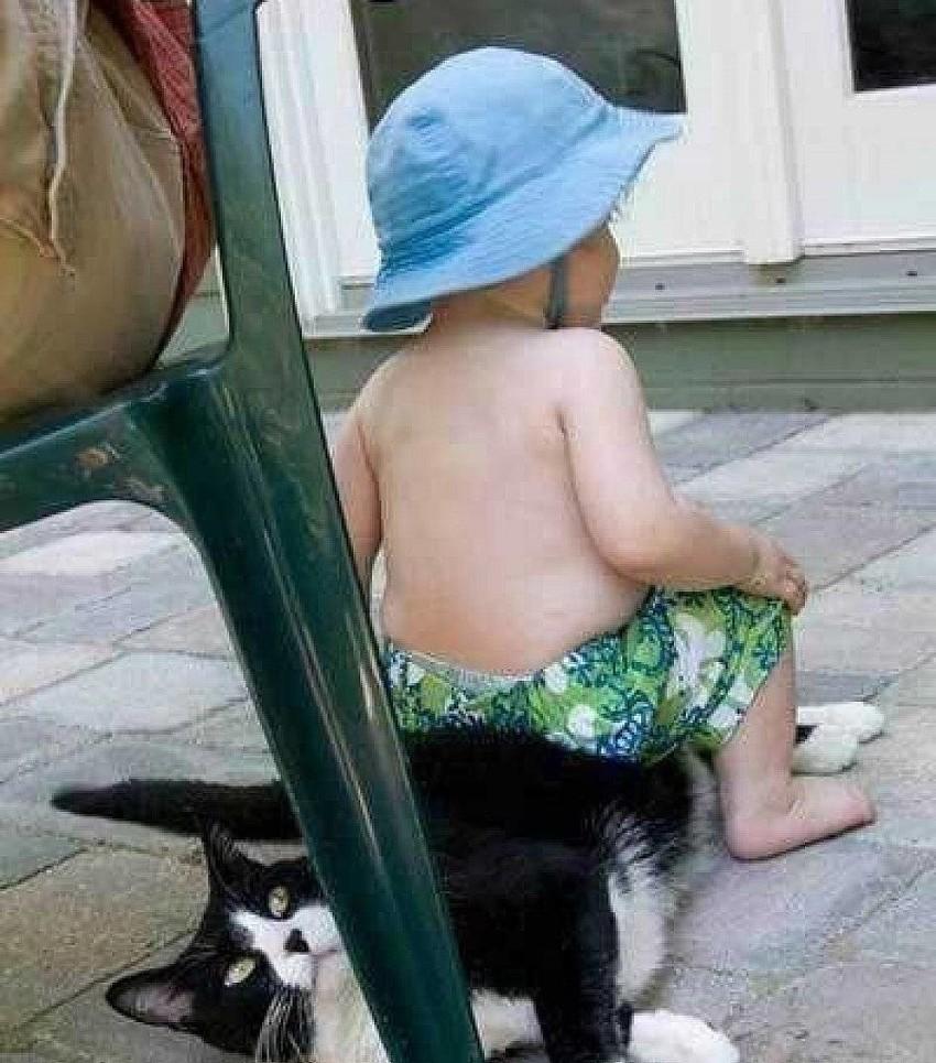 Впрочем, иного перепадает и котам дети, животные, прикол, юмор