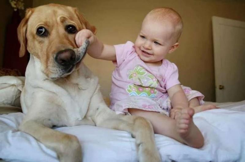 Даже если пациенты не очень-то этого и хотят дети, животные, прикол, юмор