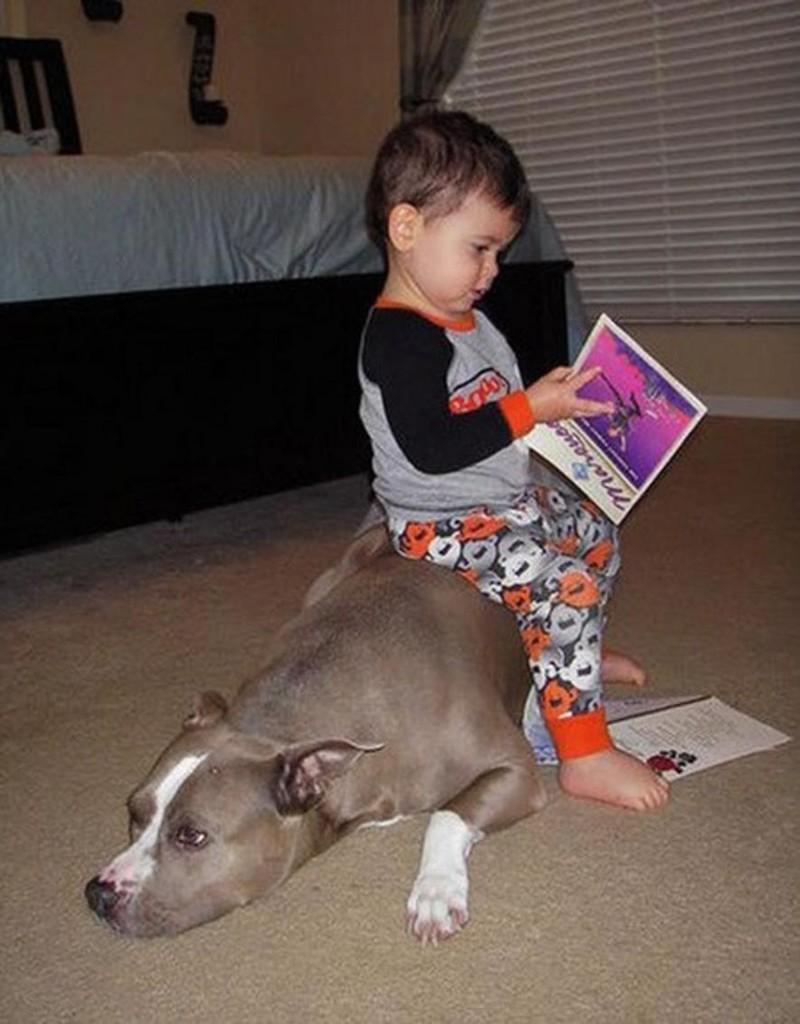 Ещё дети очень любят использовать своих животных в качестве подставок и подушек дети, животные, прикол, юмор