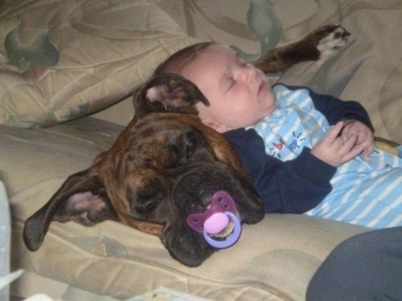 Особенно в этом отношении не везёт крупным собакам дети, животные, прикол, юмор