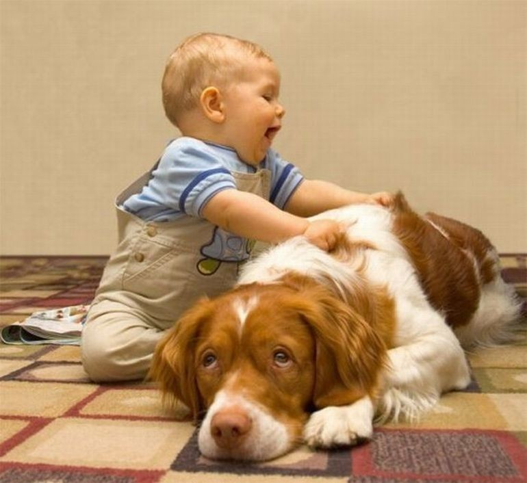 Небольшой массаж никогда не повредит, но как-то пёс ему не особенно рад дети, животные, прикол, юмор