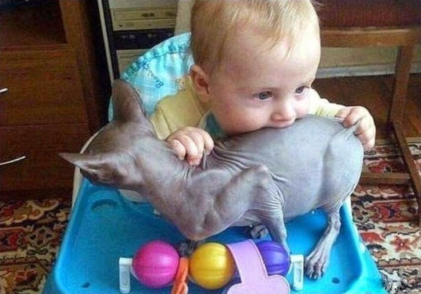 Особенно в домах с очень любопытными детьми, которые всё норовят попробовать на вкус дети, животные, прикол, юмор
