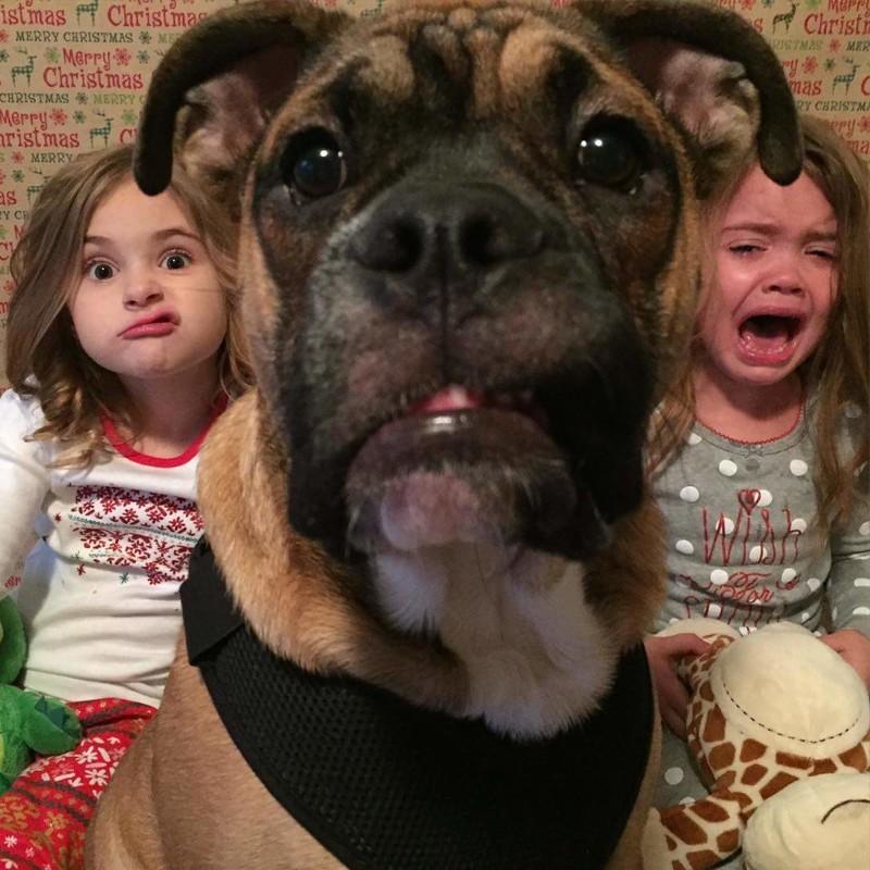 Страх и ненависть в семье бедного пса дети, животные, прикол, юмор