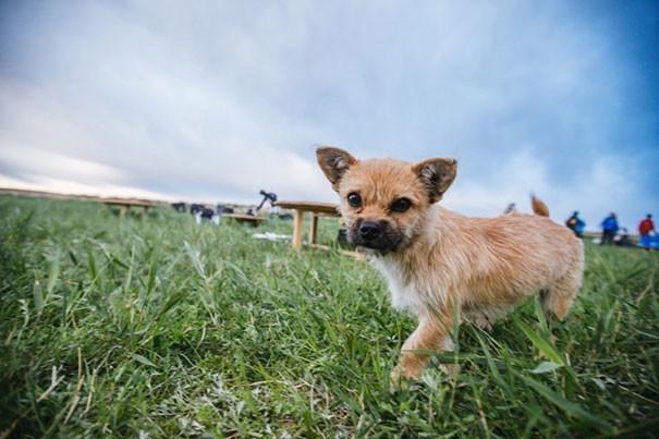 Леонард подумал, что столь маленький щенок вряд ли долго продержится собака, спорт