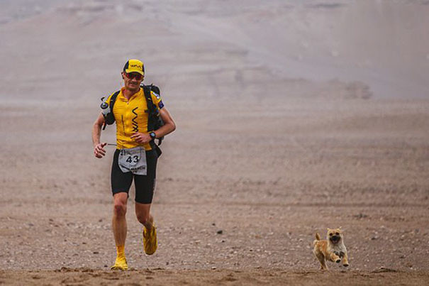 К бегуну Леонарду Диону во время забега в Китае присоединился щенок, пробегавший с ним по 23 мили в день собака, спорт