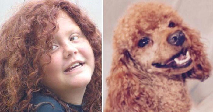 Забавный аккаунт в Twitter, который найдет каждому двойника среди собак twitter, двойник, животные, собака