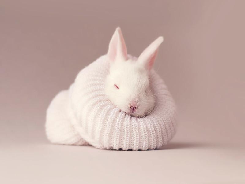 Осторожно, разрыв мимиметра: фотосессия новорожденного кролика животные, кролик