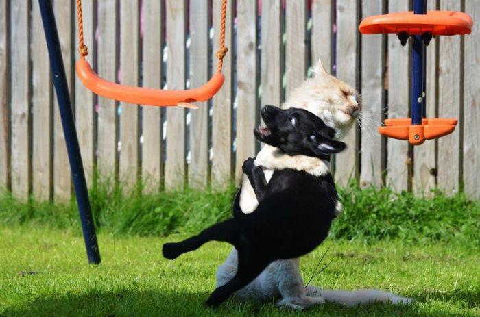 30 веселых фотографий с животными животные, приколы, удачный кадр, юмор
