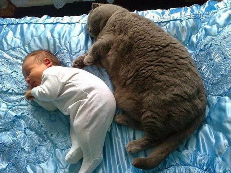 16. Два очарования  животные, кот, толстяк