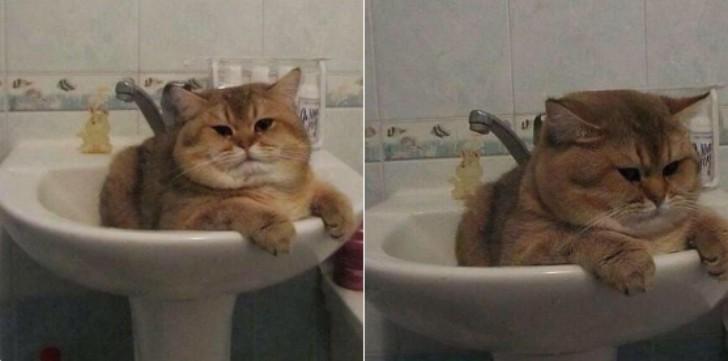13. Просто толстый котик в раковине  животные, кот, толстяк