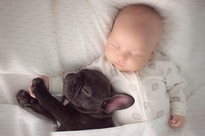 """""""Фарли терпеливо играет с ним и старается не храпеть, когда они спят вместе"""" бульдог, животные, милота, ребенок, собака"""