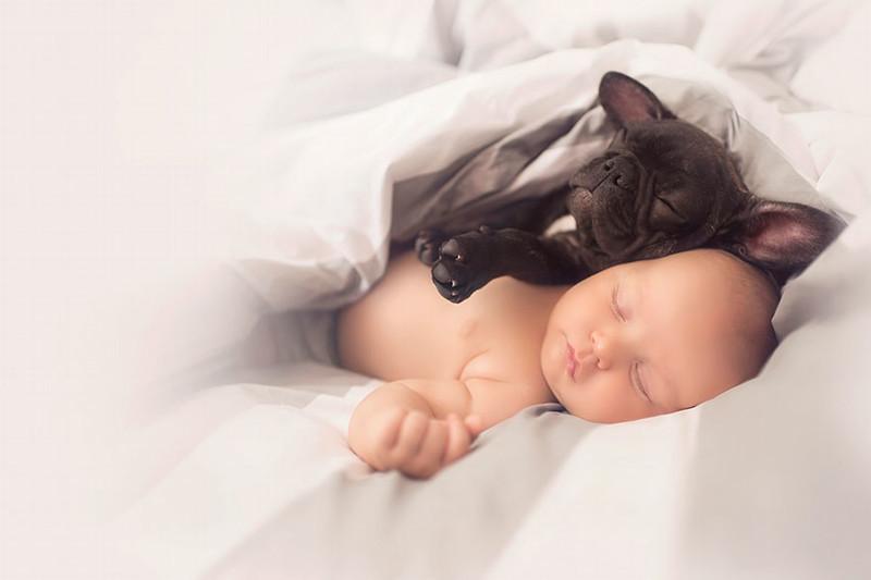"""""""Фарли очень деликатен и в то же время неловок - нужно помнить, что он тоже еще ребенок"""" бульдог, животные, милота, ребенок, собака"""
