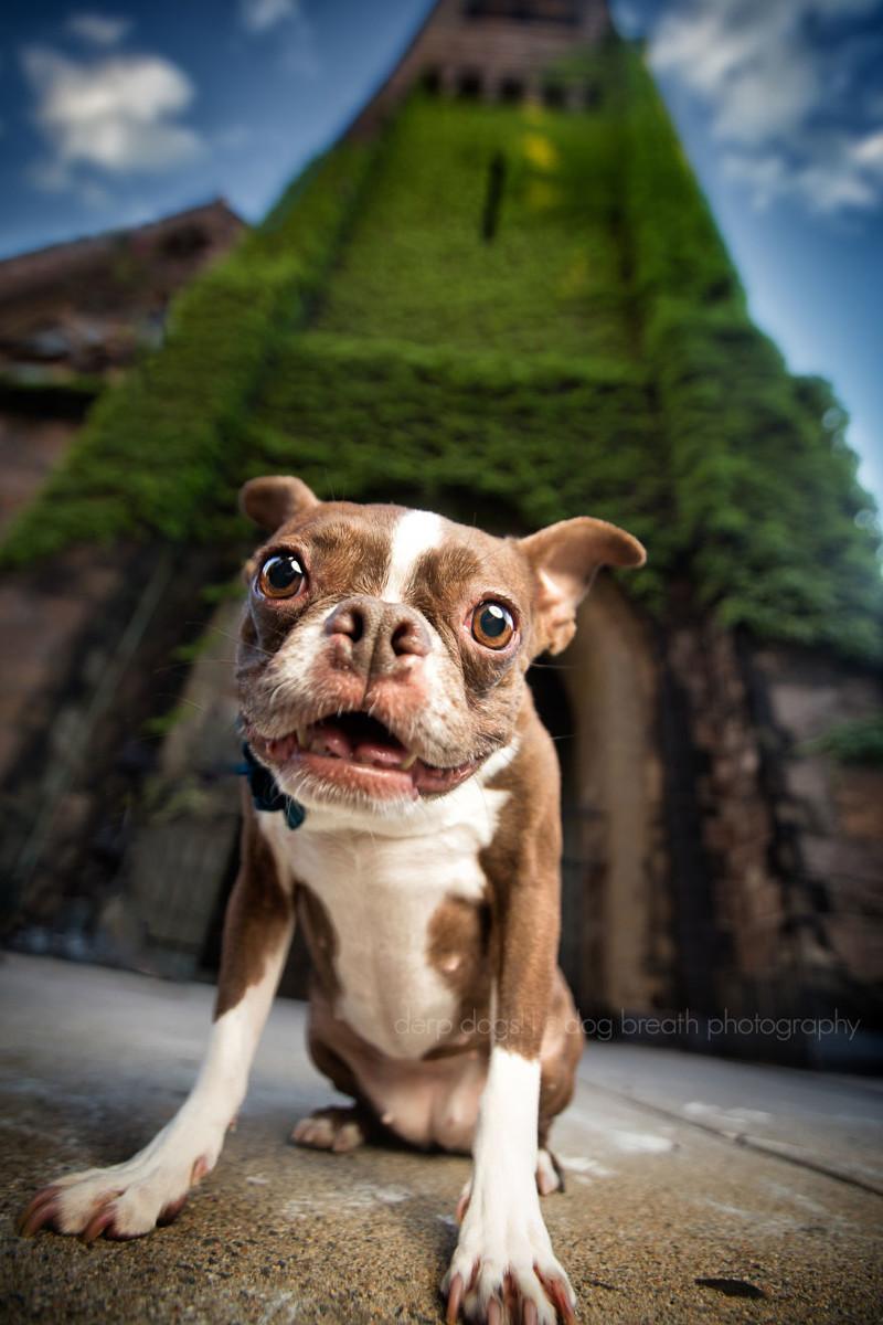 15 ужасно милых собак, которых застали врасплох собаки, фото, юмор